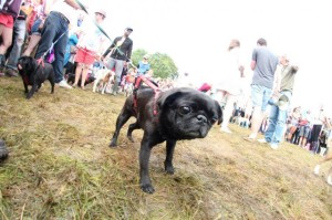 dog show Standon Calling