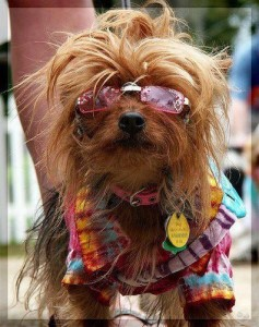 festival dog