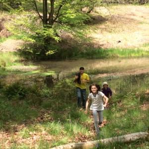 Elderflower Fields 2015