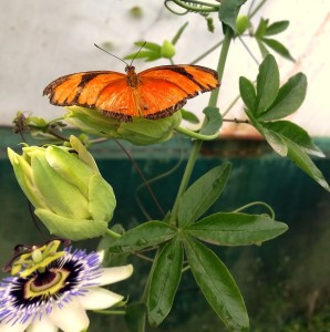 It was lovely and warm in the Butterfly house