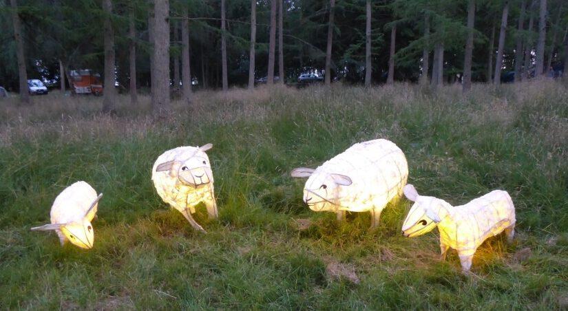 lantern parade - sheep
